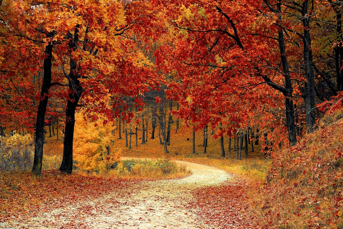 Winding country road through trees with bright fall colored leaves